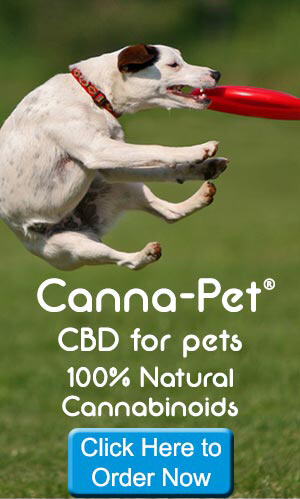 CBD Cannabidiol Hemp Oil For You and Your Pets